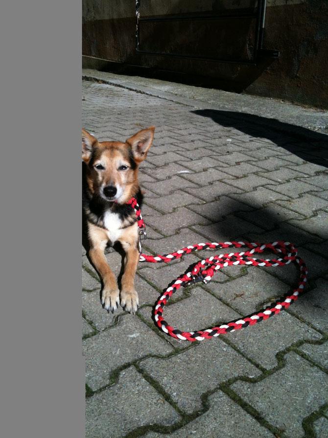 Hundeleine mit passendem Halsband in Polypropylen