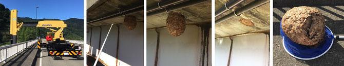 ハチ駆除 白山市