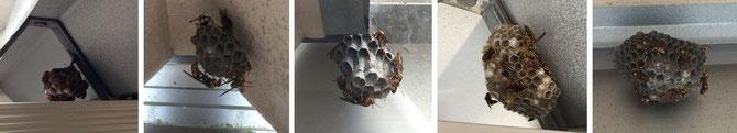 ハチ駆除 石川