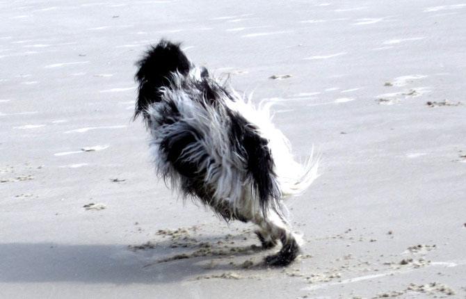 Ich hüpfe am Strand außer Rand und Band