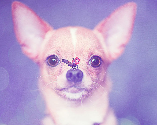 Chi-Love.de | Blog | Frühling | Chihuahua