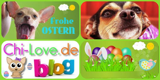 Chi-Love.de | Blog | Chihuahua | Frohe Ostern