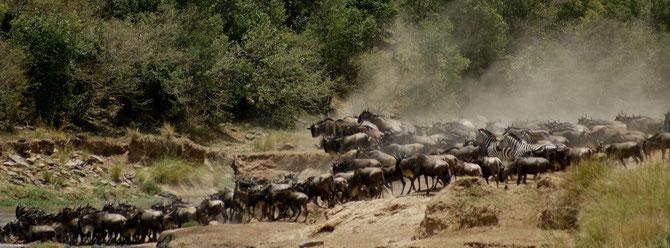 Gnu passano il fiume Mara