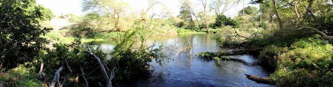 Mzima Spring-Panorama
