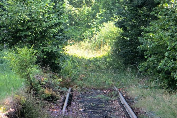 Nur knapp ein einhalb Jahre nach der letzten Zugfahrt erobert sich die Natur an vielen Stellen bereits den kompletten Gleiskörper zurück