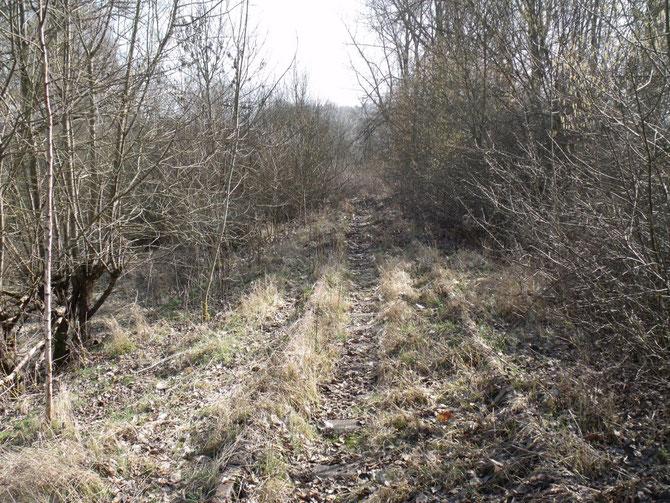 Schienen sind auf der Westeifelbahn momentan nur schwer zu erkennen