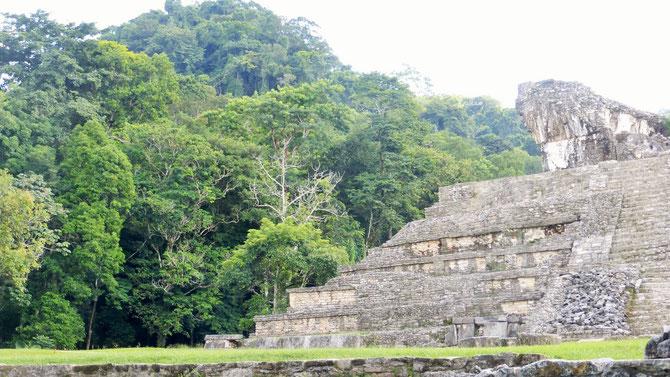 Palenque, die mitten im Dschungel gelegene Mayaruinenstätte.