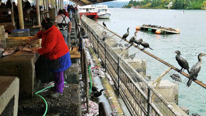 Die Fischseite der tollen Markthalle von Valdivia. Nach dem Ausnehmen der Fische werden die Abfälle den darauf wartenden Seelöwen und Kormoranen und Möwen vorgeworfen. Eine geniale Entsorgungsmethode.