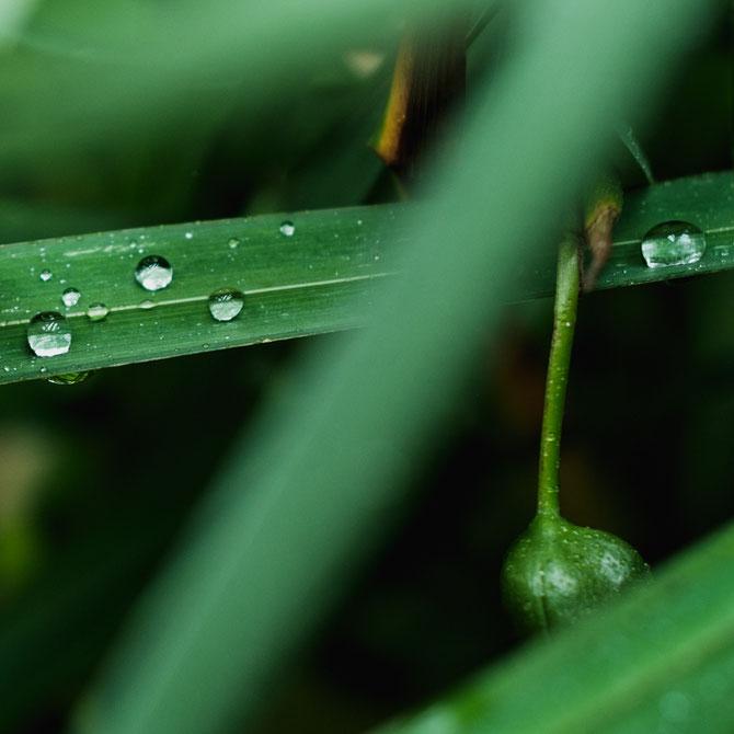 雨滴と草花