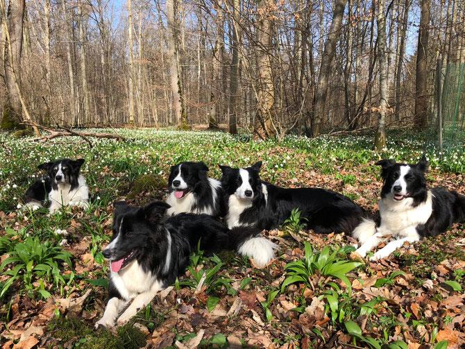 Unsere Hunde - Lilli, Sam, Joy, Flo und Pearl