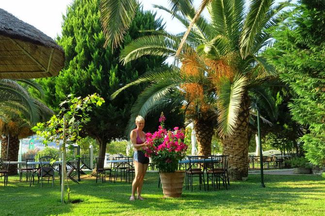 "Palmenpark auf dem Camping ""Paradiso"" bei Nea Iraklitsa"