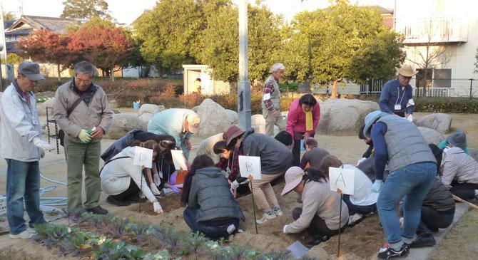 【写真】4班に分かれ、いろんな球根の植え付けを体験・・