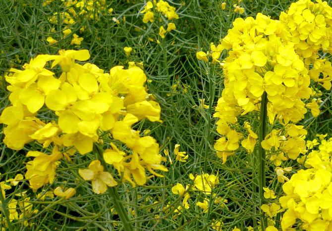 美しいお花・・・支えているのは理念と汗!