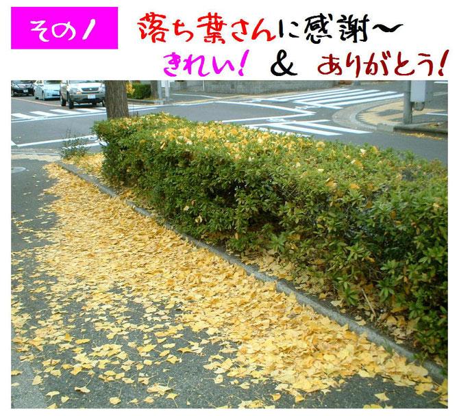 夏:涼しい木陰 → 秋:黄色のじゅうたん、