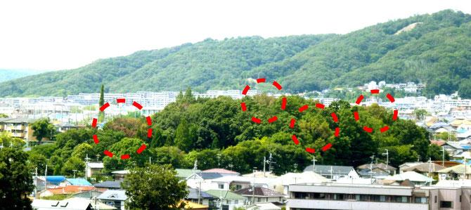 """""""瀬川の森""""の枯れ木(8/18撮影)。右の1/4が公園、残りは神社林=市指定保護樹林。"""