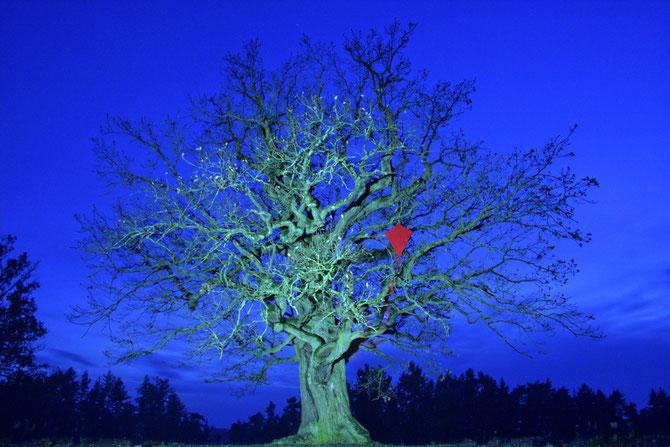 Drachenbaum in der blauen Stunde