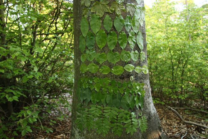 Unterschiedliches Blattgrün im Frühling, Idee und Ausführung Axel Zwiener