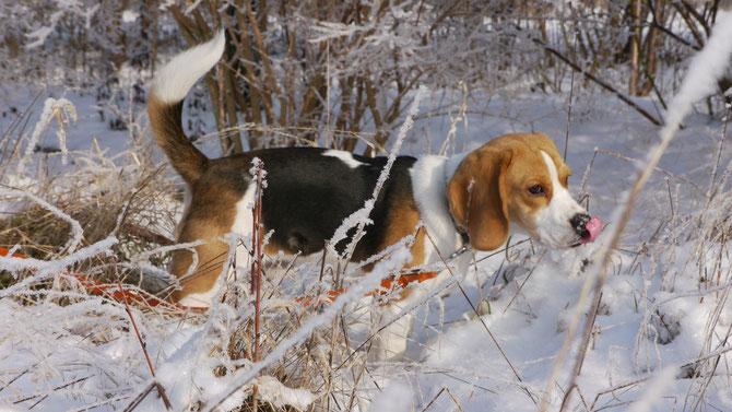 ...die ersten  Erkundungen im Schnee...