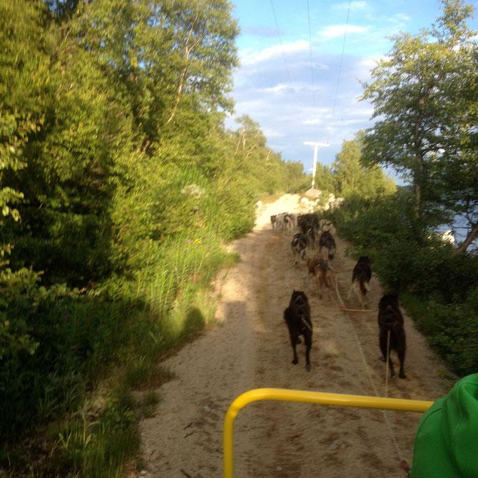 Gespannfahrt mit 18 Huskys
