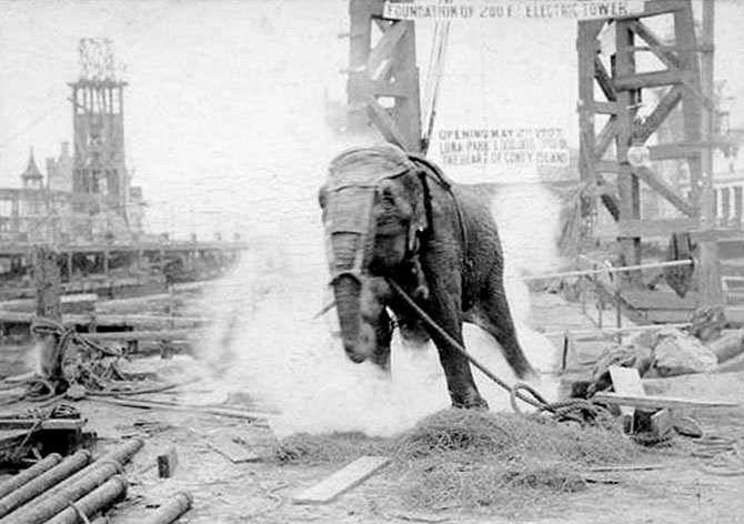 Edison's demonstration of an electrocution of the Topsy the elephant