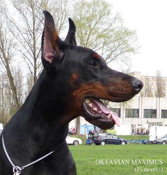 Oktavian Maximus, на фото 11 месяцев