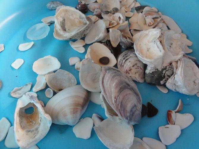 海で拾った貝殻