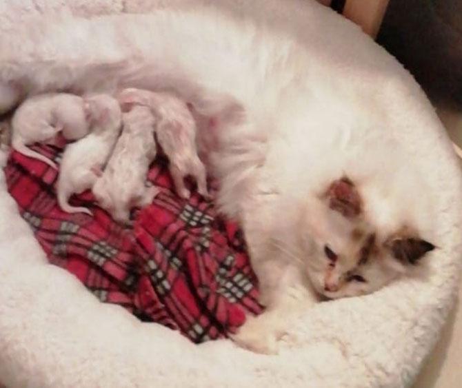 mamma Cherie ed i suoi 4 cuccioli