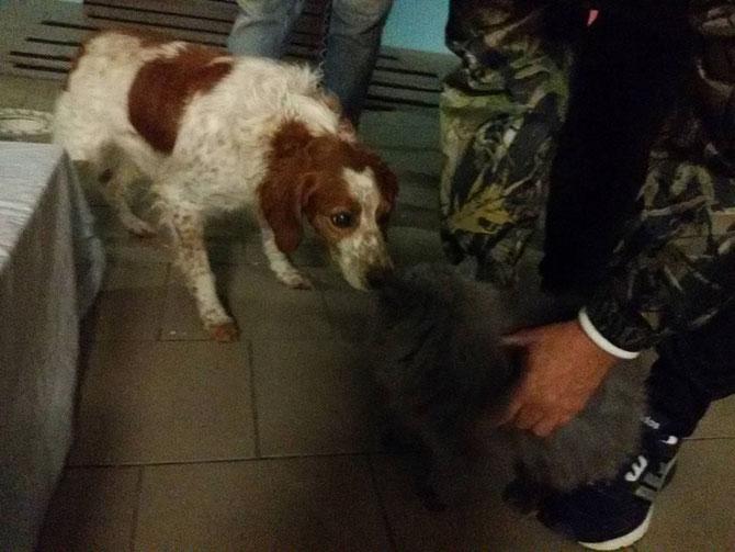 Girello ist mit Katzen verträglich :-)