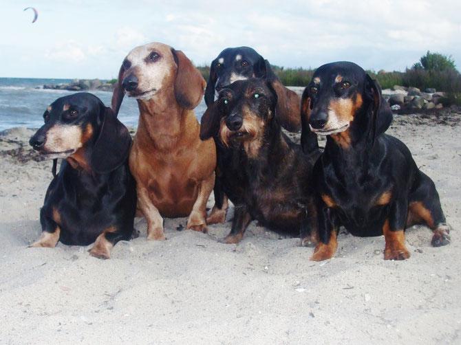 Flicka und Francesca mit Amy ,Aika und Asterix .Kurz die Hansens und die Jessens .