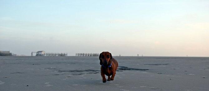 Kalle Cool in Sankt Peter Büll auf der Sandbank an der Nordsee