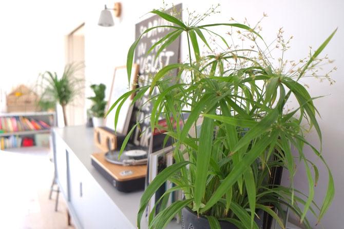 Lybstes Interiordesign, Altbausanierung, Wohnzimmer hyggelig einrichten