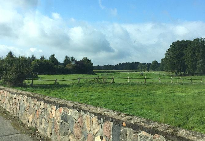 Das Haus liegt ein bisschen Abseits und bevor man richtig ins Dorf reinfährt, kommt man an Pferdekoppeln und Steinmauern vorbei... irgendwie sehr idyllisch :)