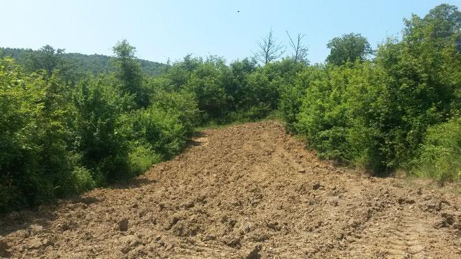 campo dove c'era favino, già preparato per la semina di settembre