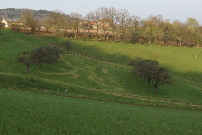 Klassische Streuobstwiese mit gepflegtem Dauergrünland und altem Baumbestand.