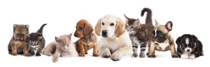 Hund Katze Nager