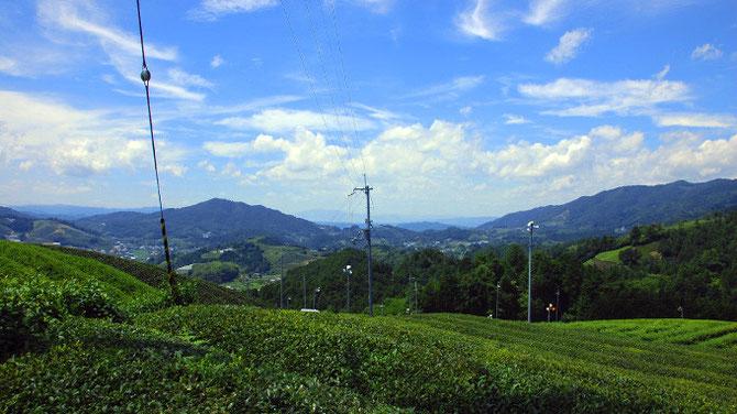 和束町「園」の茶畑