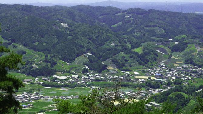 山の頂まで茶畑が広がる宇治茶の郷、和束町。