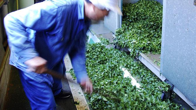和束町 製茶工場