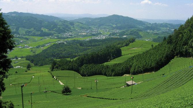 養生の芝:後醍醐天皇が養生した場所と伝わっております。