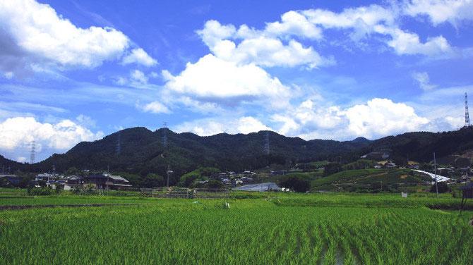 和束町 田園風景