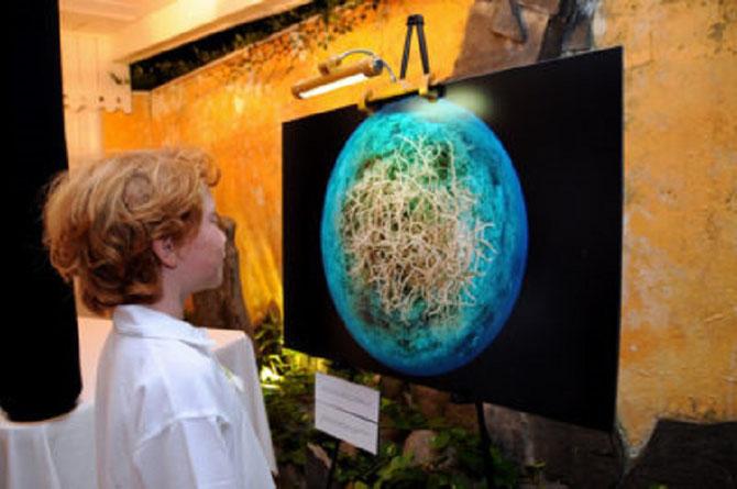 18 Oct. 2016.  BALTIMORE Aquarium N.. EXPO.  POLYNESIE FRANçAISE Récifs coralliens à travers la lentille. Photos  Michele  WESTMORLAND .  C* www.livingoceansfoundation.org.