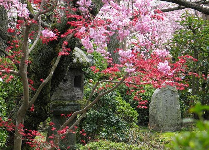 KYOTO . C* www.cyrilalmeras.com