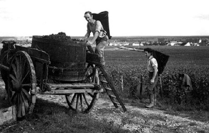 VENDANGES 1940