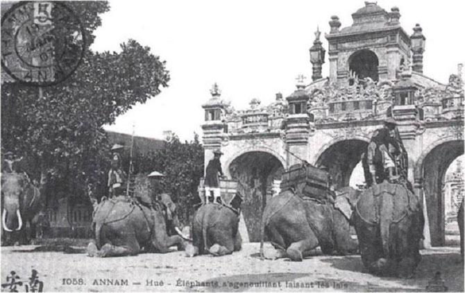 ELEPHANTS AGENOUILLES FAISANT AUSSI LES GRANDS LAYS.