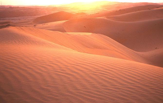 LE DESERT EST OMNIPRESENT