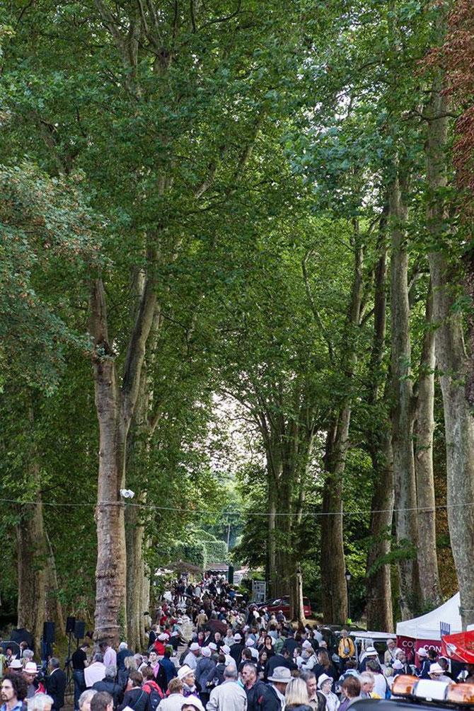 """DIM.  30 AOÛT 2015. 20è EDIT. """"FORÊT DES LIVRES"""". LES PLATANES QUI TOUCHENT LES NUAGES...  C*  www.my-loire-valley.com"""