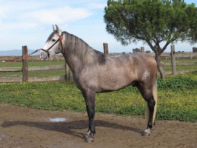 FLORERO 2009, PETIT-FILS DE PANADERO, FILS DE FLORERA et de PENDULO (hierro PALLERE)