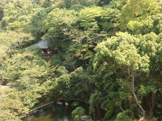 コイが悠々と泳ぐ池や、古いお社のある広大な庭園。