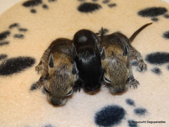 von links: Amelie, Arthur & Alfi