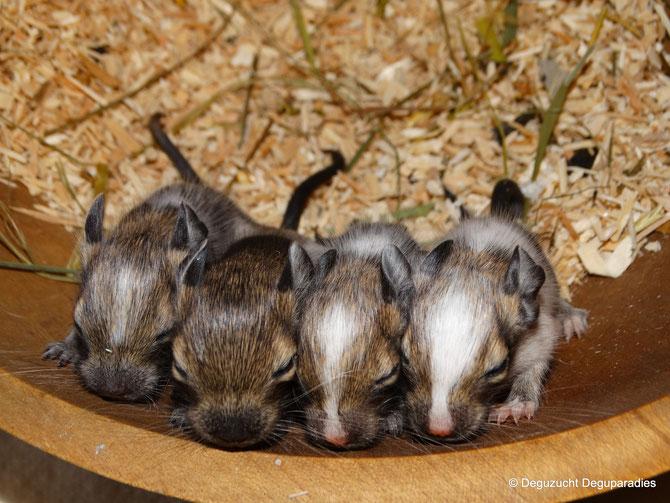von links: Timbo, Timba, Tilda & Thamino